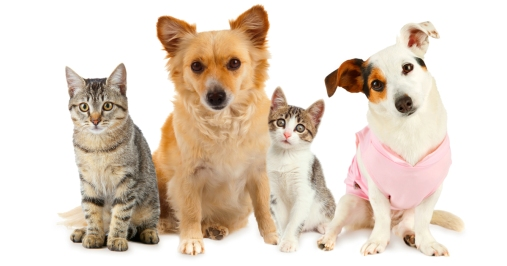 file_21032_the-most-popular-dog-and-cat-names